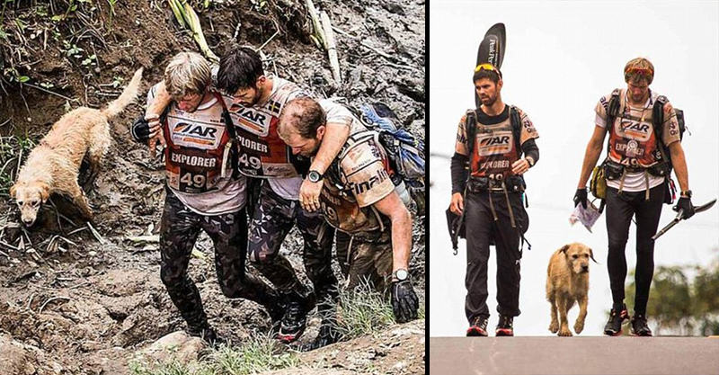 1151 Stray Dog Completes 400 Mile Race With Extreme Sports Team, Finds New Home