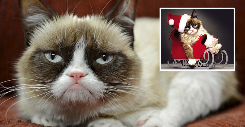 231 Internet Sensation Grumpy Cat Has Made Its Owner Over £60 Million