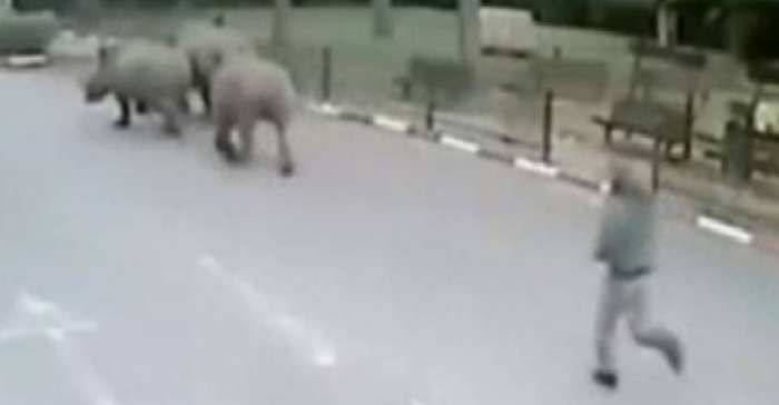 rhino e1421600293560 Watch This Security Guard Chase After Three Rhinos That Did A Runner While He Was Sleeping