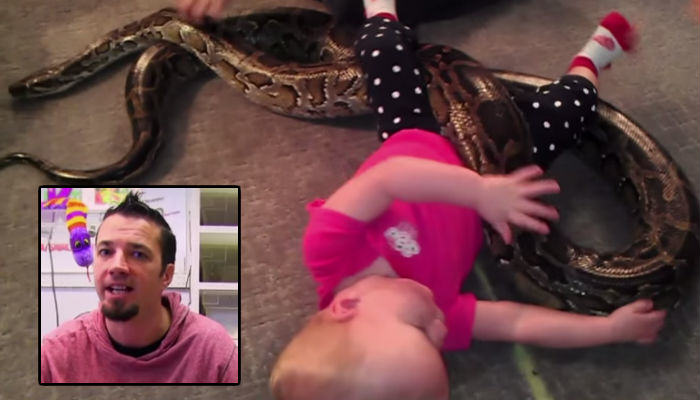 snake web thumb Dad Lets Baby Play With 13ft Python To Prove Snakes Are Safe