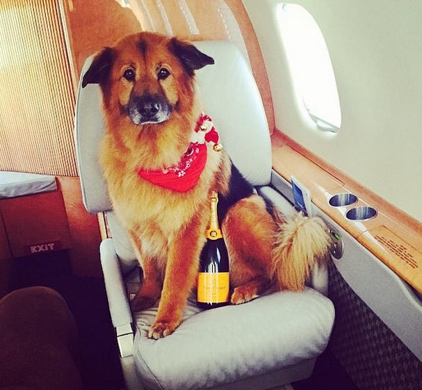 1111 These Rich Dogs Of Instagram Are Living A More Glamorous Life Than You Are