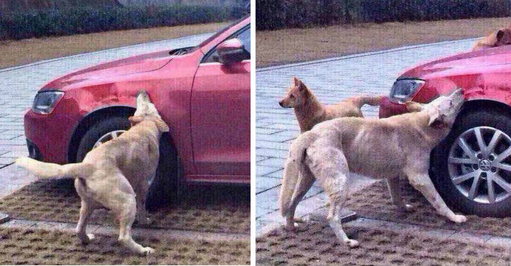 dog tn Dog Kicked By Guy Comes Back With Mates And Destroys His Car