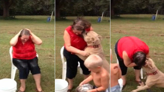dog Pitbull Attacks Grandmother As She Does Ice Bucket Challenge
