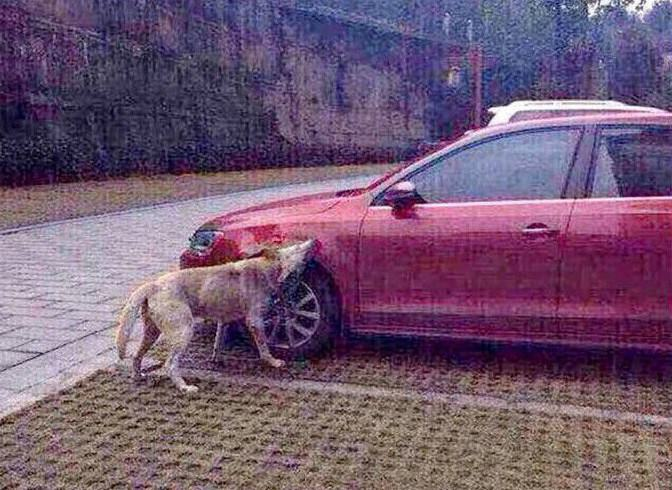 okijok Dog Kicked By Guy Comes Back With Mates And Destroys His Car
