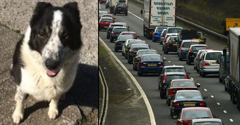 181 Delays On Motorway After Dog Was Spotted Driving Tractor