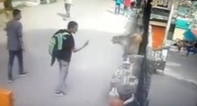drop kick Guy Gives Monkey The Finger, Monkey Takes Him Out In Response