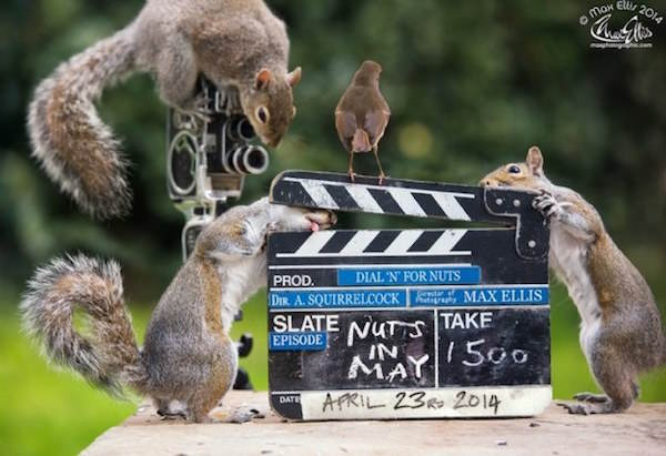 10 This Guy Found A Way To Photograph Squirrels Lifting Weights