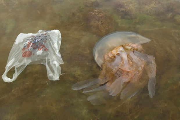 226 Massive Jellyfish With 6ft Tentacles Are Washing Up On Britains Beaches