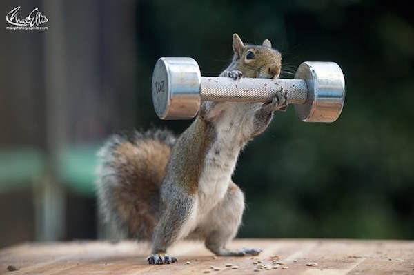 31 This Guy Found A Way To Photograph Squirrels Lifting Weights