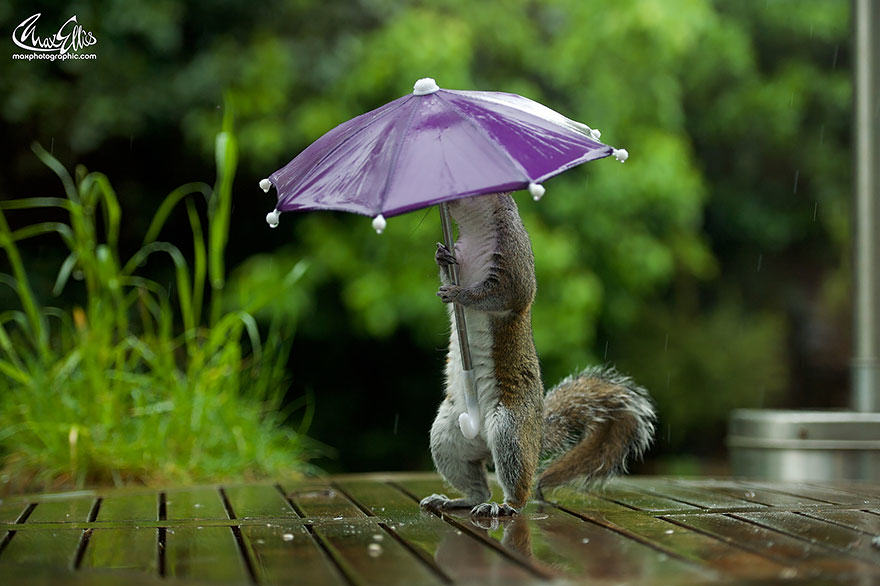314 Photographer Gives Squirrel A Tiny Umbrella, Takes Best Photos EVER