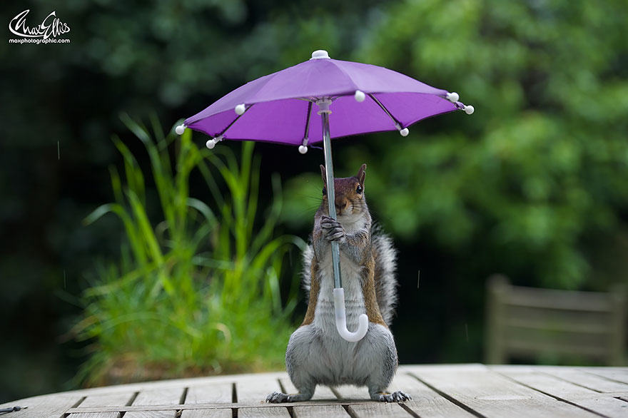 59 Photographer Gives Squirrel A Tiny Umbrella, Takes Best Photos EVER