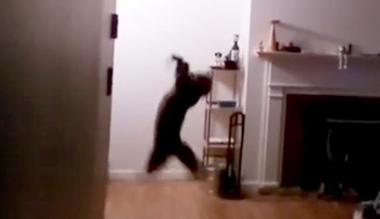 bat Watching This Cat Catch A Bat Out Of Mid Air Is Simply Epic