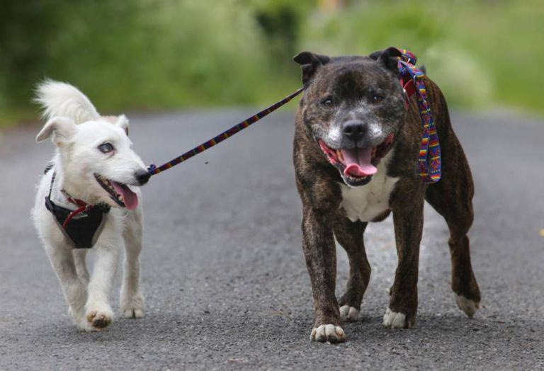 1117 This Blind Dog Has His Own Guide Dog, And They Both Need A Home