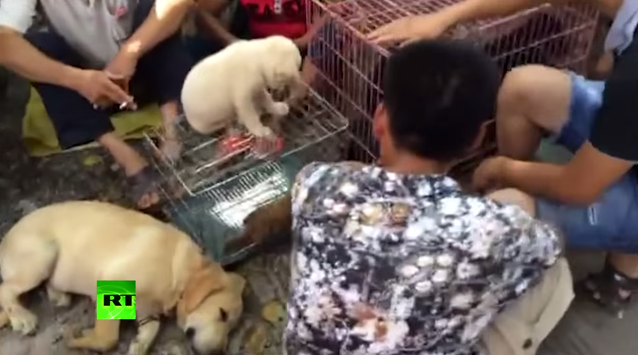 Screen Shot 2015 06 22 at 11.26.56 Hidden Camera Captures Preparations For Yulin Dog Meat Festival