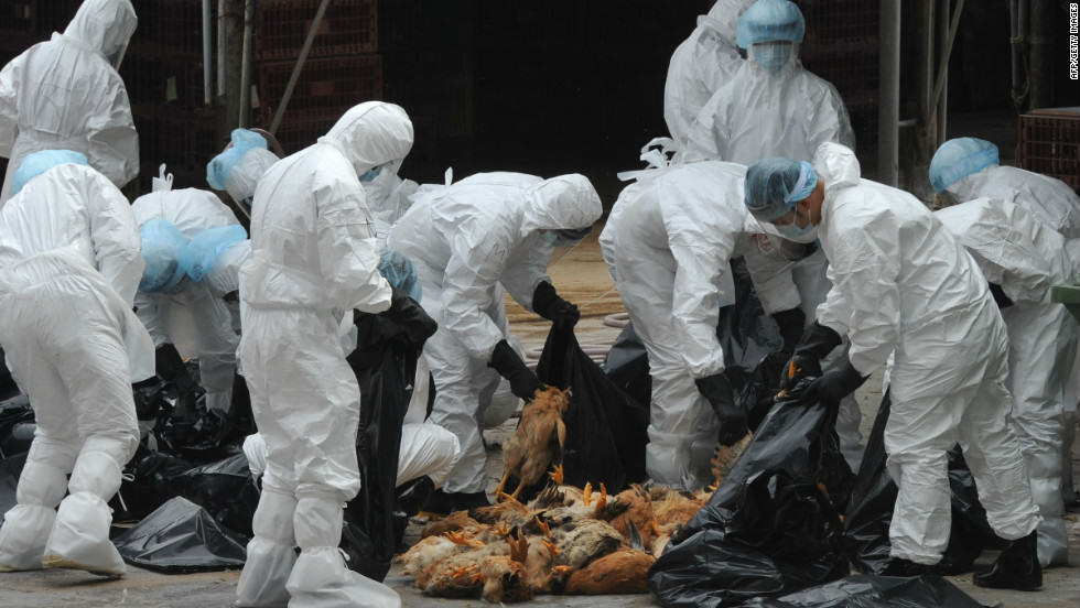 111221092505 bird flu horizontal large gallery Bird Flu Is Back: 170,000 Birds Destroyed At Lancashire Farm