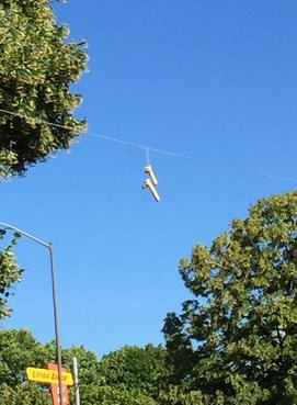 315 In Portland, People Are Dangling Dildos From Power Lines