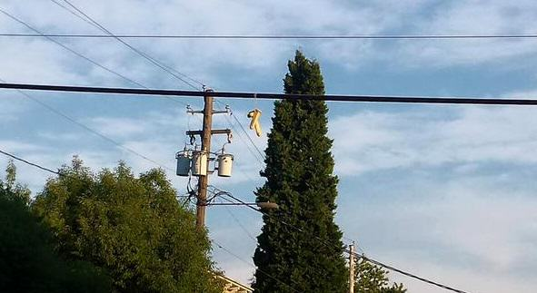 411 In Portland, People Are Dangling Dildos From Power Lines