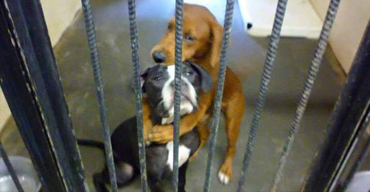 Heartbreaking Photo Of Two Hugging Dogs Saves Them From Being Put Down dog photo sad FB