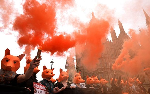 Fox Hunting Debate Delayed After SNP Forces David Cameron Rethink fox hunting 2