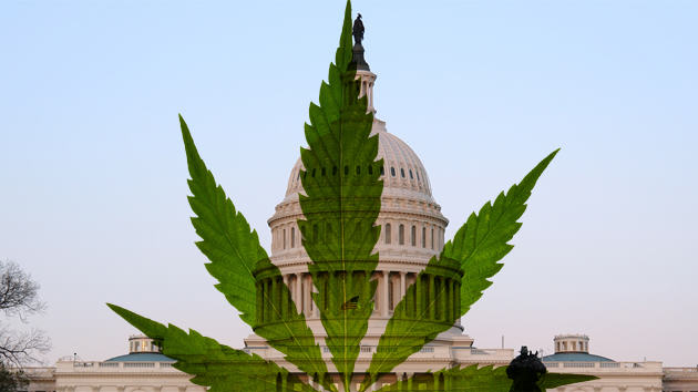marijuana us 2 Washington Have Earned A FORTUNE Since Legalising Weed