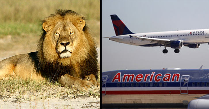 ClM5FuYXA Major Airlines Ban Transport Of Big Game Trophies Following Killing Of Cecil The Lion
