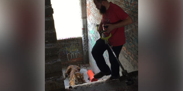 UNILAD 13899610413365521117 Detroit Man Fails To Scare Tiger From Abandoned Warehouse With Garden Tool