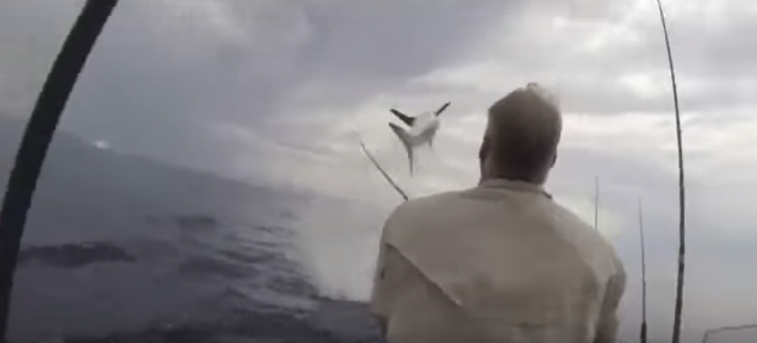 UNILAD IvtK15FquR Moment Shark Jumps 12 Feet Out Of Water, Terrifying Fisherman