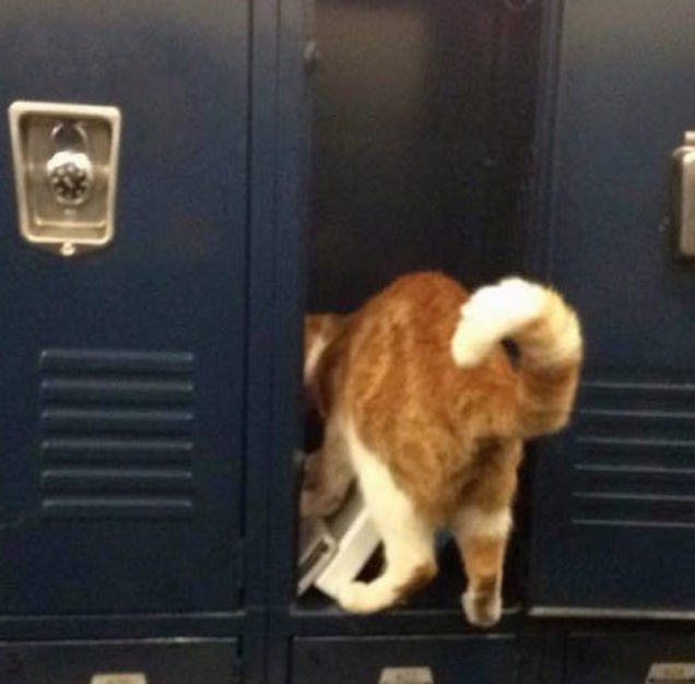 UNILAD bub8 This Cat Loves School So Much, Hes Been Officially Made A Student