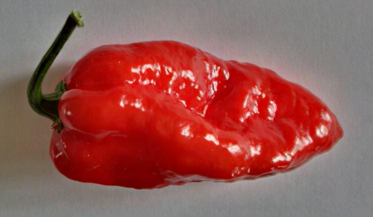 The Hottest Chilli Pepper Money Can Buy Is Now On Sale In The UK UNILAD chilli 28