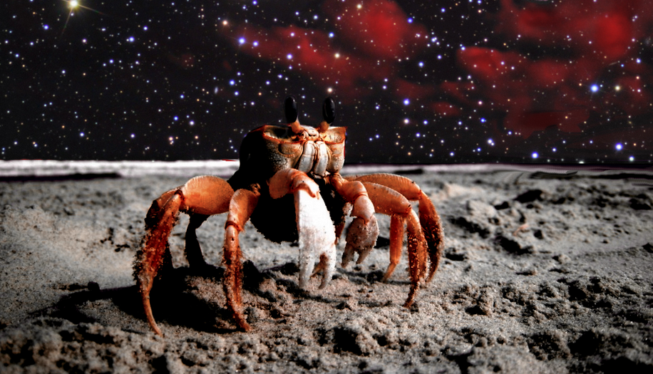 zvrXxPR8U NASA Spot Something Crab Like On Mars And People Are Going Mental