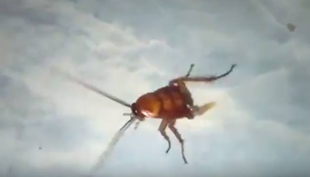 NOPE! Cockroach Lives On After Being Chopped In Half UNILAD Screen Shot 2015 09 17 at 12.30.186