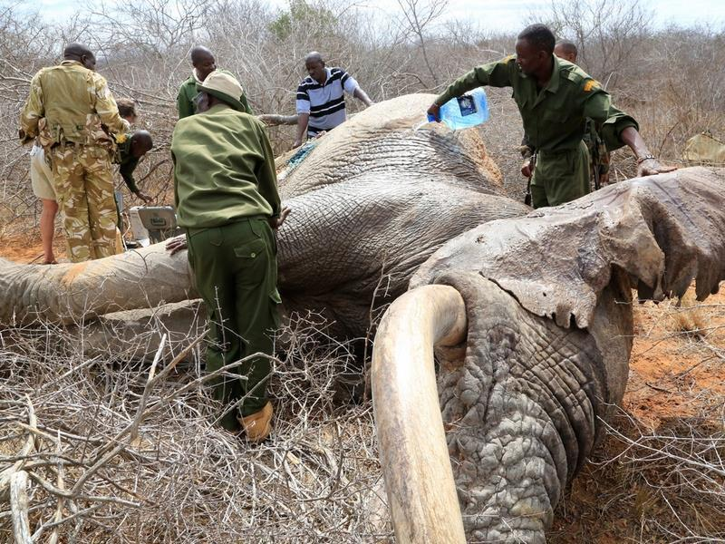 UNILAD ele26 Elephants Wounded By Poison Arrows Seek Out Humans To Save Their Lives