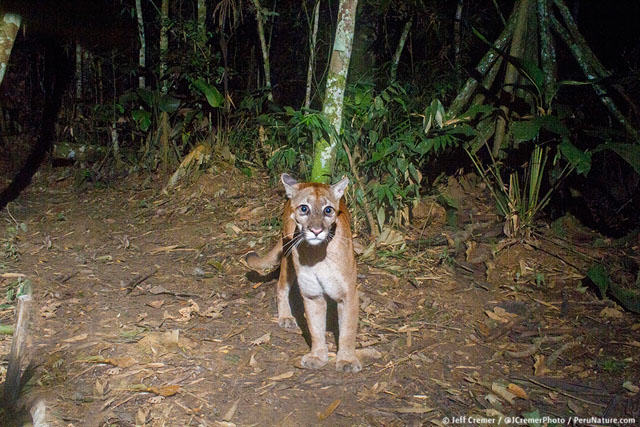 UNILAD rainforest animals 24 Guy Sets Up Camera Trap In Amazon Jungle And Snaps Rare Animals