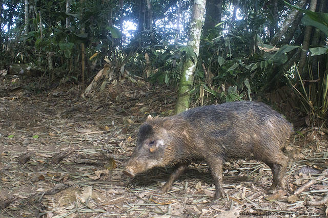UNILAD rainforest animals 55 Guy Sets Up Camera Trap In Amazon Jungle And Snaps Rare Animals