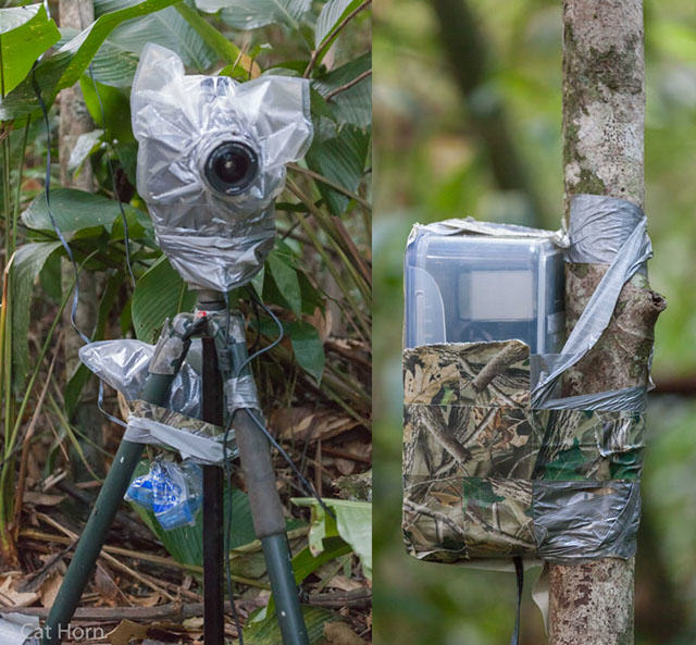 UNILAD rainforest animals 98 Guy Sets Up Camera Trap In Amazon Jungle And Snaps Rare Animals