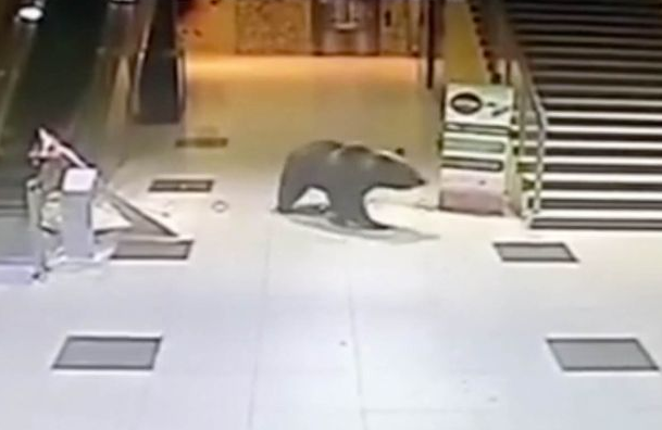 Bear Forces Its Way In And Out Of Shopping Centre Before Being Shot UNILAD Screen Shot 2015 10 15 at 19.43.404