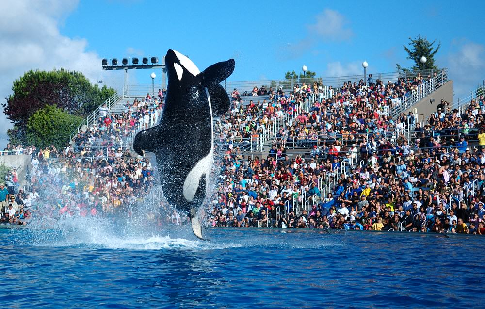 UNILAD 2009 Seaworld Shamu8336 Killer Whale Shows To Be Phased Out At SeaWorld