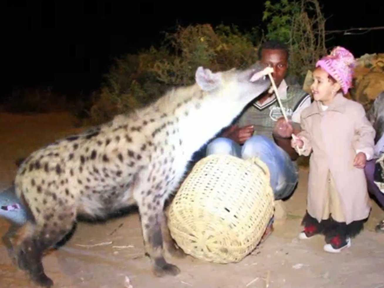 UNILAD afp34939 Video Shows Ethiopian City Where Kids Feed And Befriend Wild Hyenas