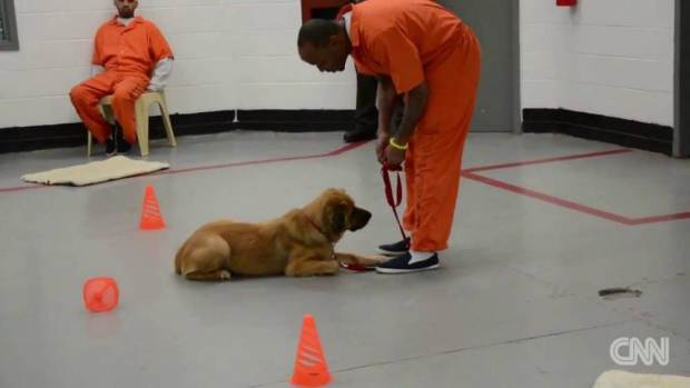 UNILAD dog prisoners 237207 Prisoners Have Been Given Dogs As Cell Mates And The Results Are Extraordinary