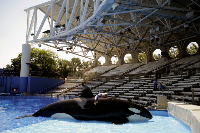 UNILAD seaworld179117 Killer Whale Shows To Be Phased Out At SeaWorld