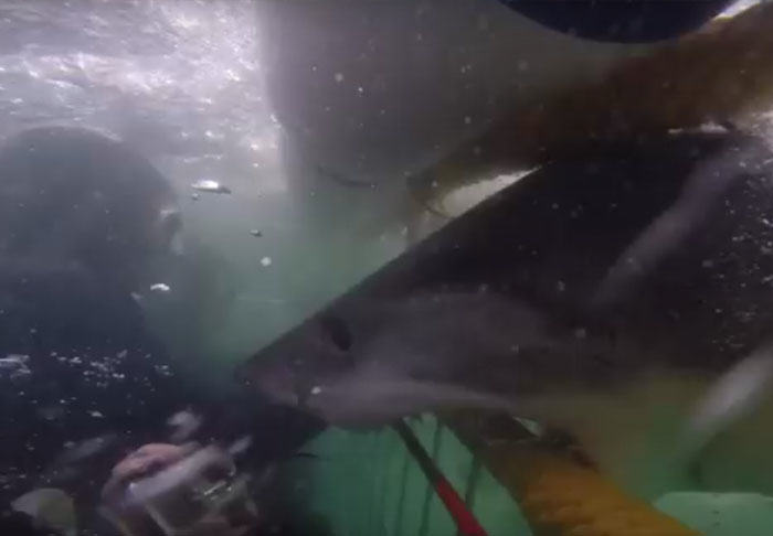 UNILAD shark26929 Divers Narrowly Avoid Great White Shark That Smashes Into Their Cage