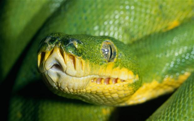 UNILAD snake82734 These Are The Top 10 Deadliest Animals In The World