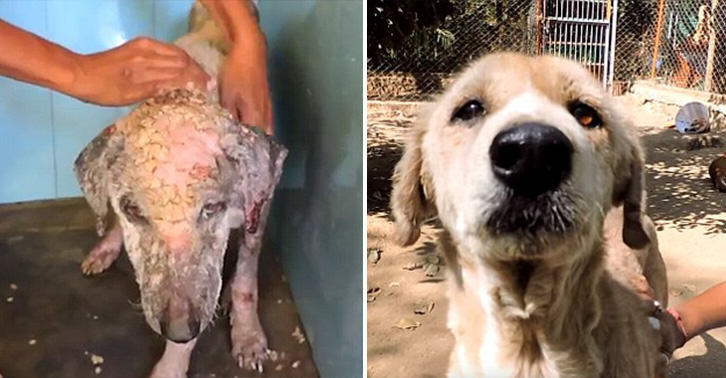 Miraculous Recovery Of Dog Who Turned To Stone Because Of Mange mange dog WEB 2