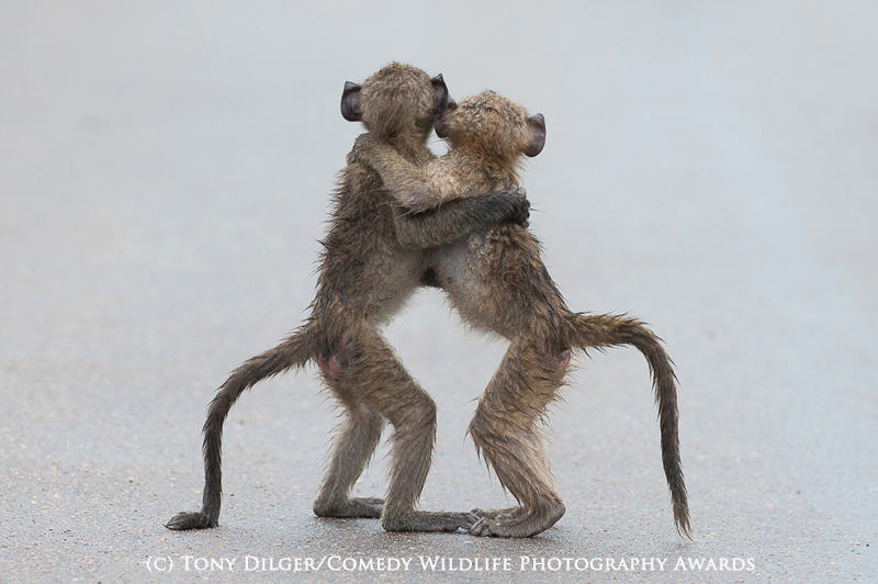 The Winners Of The 2015 Comedy Wildlife Photography Awards Have Been Revealed wildlife awards 10