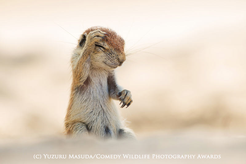 wildlife awards 11 The Winners Of The 2015 Comedy Wildlife Photography Awards Have Been Revealed