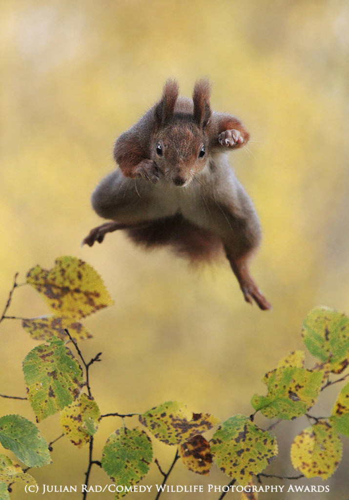 The Winners Of The 2015 Comedy Wildlife Photography Awards Have Been Revealed wildlife awards 12
