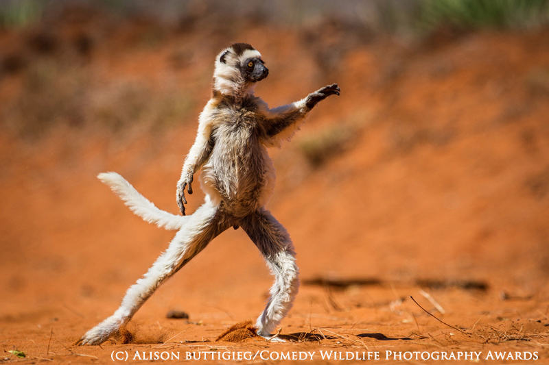 wildlife awards 4 The Winners Of The 2015 Comedy Wildlife Photography Awards Have Been Revealed