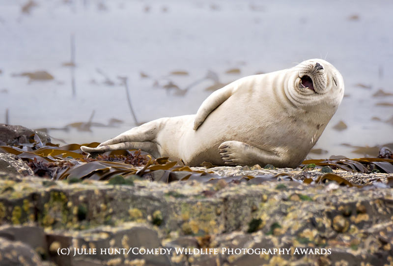wildlife awards 7 The Winners Of The 2015 Comedy Wildlife Photography Awards Have Been Revealed