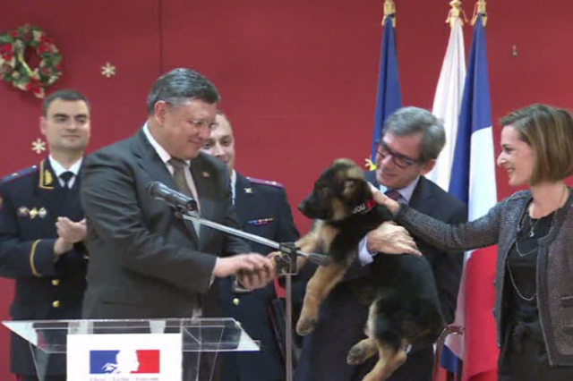 Police Handler Speaks Of Heartbreak Over Loss Of Paris Hero Dog Diesel 56660d79c46188d23a8b45c7 640x426