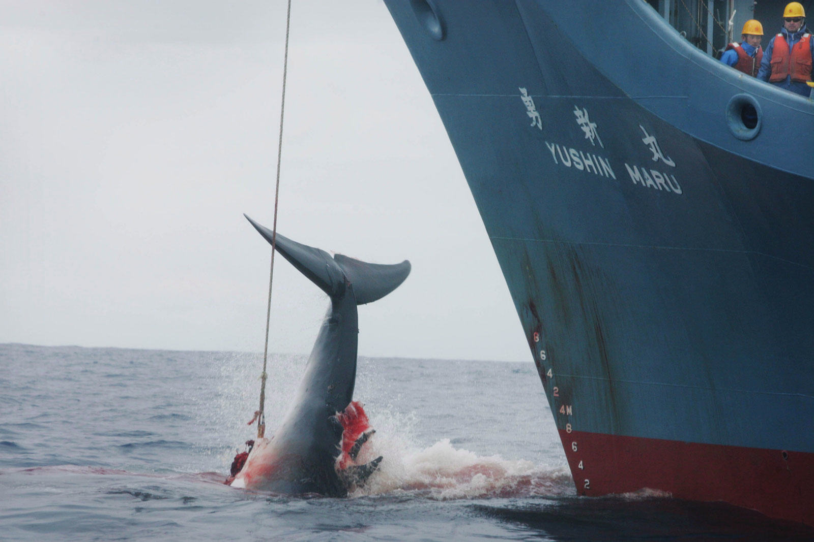 Anonymous Takes Down Nearly 100 Japanese Websites As Part Of Anti Whaling Campaign 99265 050 87DC205E 2